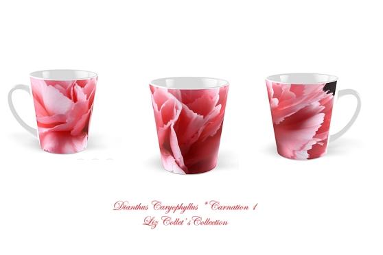 Dianthus Caryophyllus * Carnation 1  © Liz Collet