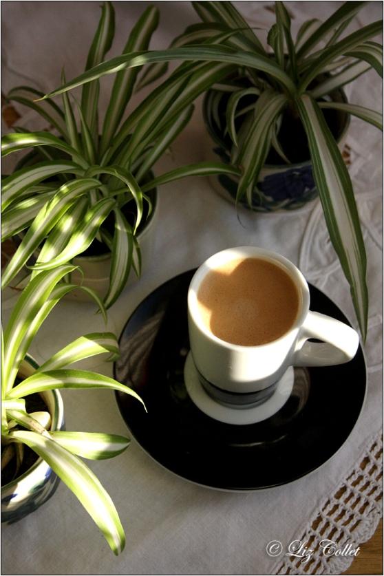 Kaffee im Grünen © Liz Collet,Kindel der Grünlilien in der Kinderstube © Liz Collet,Kindel der Grünlilien in der Kinderstube © Liz Collet, Wie man Eierkartons nutzen kann, Was Sie mit Eierkartons machen können, Zweitverwertung für Eierkartons, Ableger, Grünlilie,