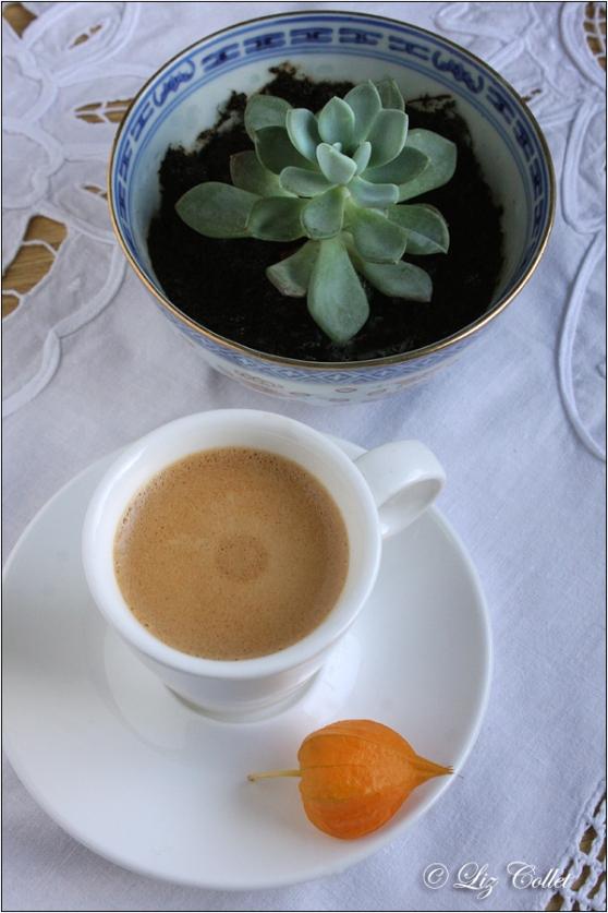 Espresso mit Echeverie und Lampionblüte © Liz Collet